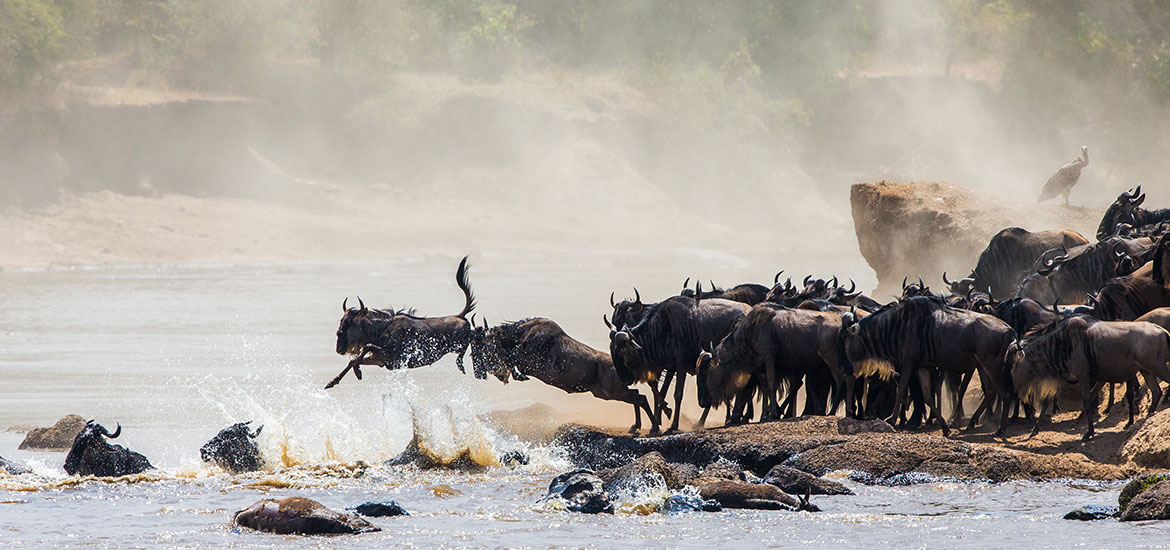 July – Great Wildebeest Migration in Tanzania