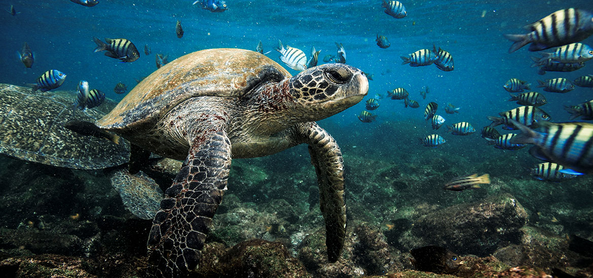 May – Snorkeling in the Galapagos Islands