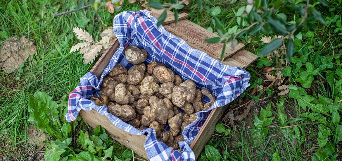 October – Truffle Hunting in Italy