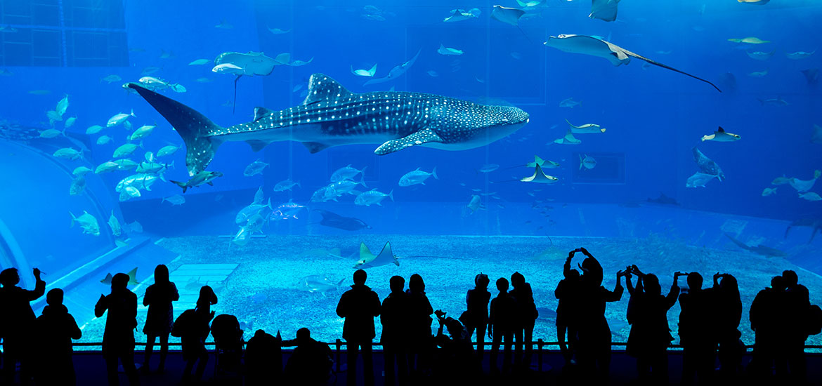 Dubai Aquarium & Underground Water zoo
