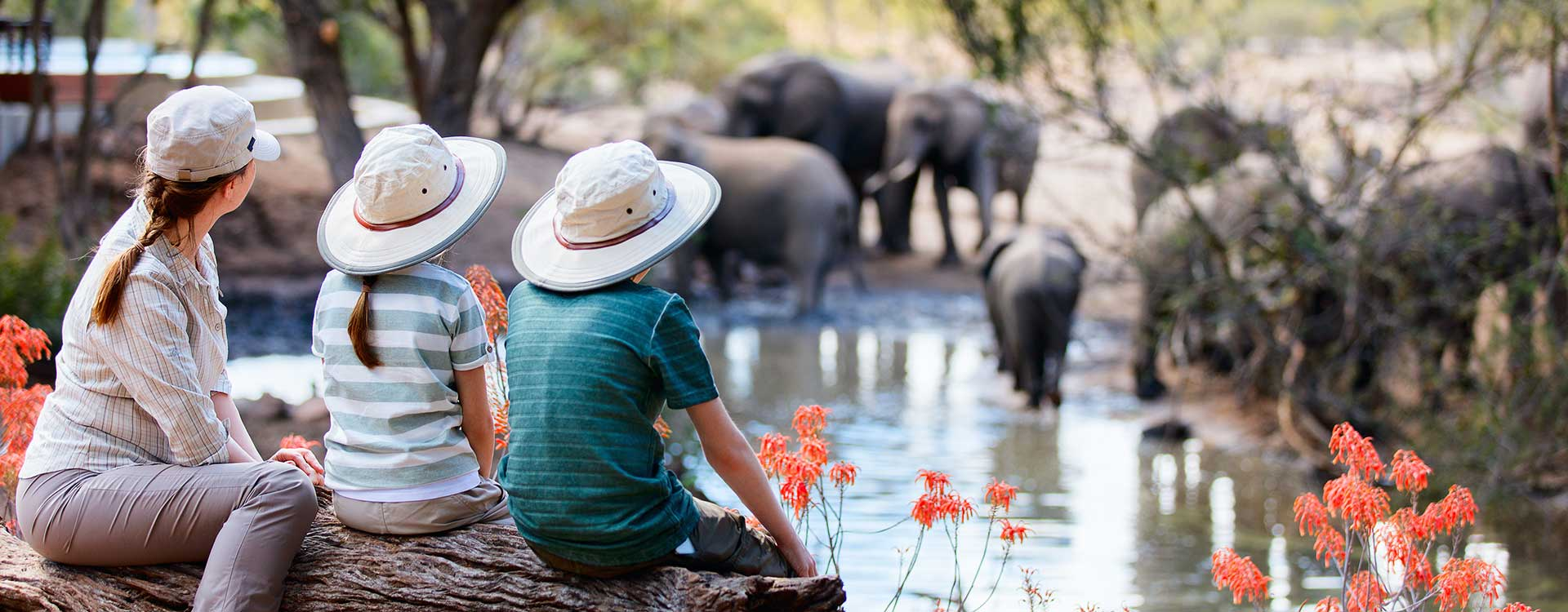 Six Greatest Safaris in Africa in 2020